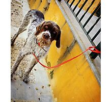 El Perro en Espana Photographic Print