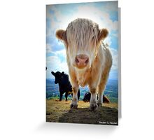 Mulven Cows Greeting Card