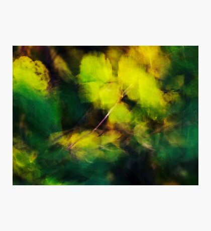 Yellow and green  blown by the wind Photographic Print