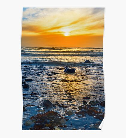 kelp at rocky beal beach Poster