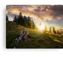 stump in front of fir forest on hillside at sunset Canvas Print