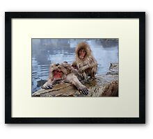 Snow Monkeys of Japan Framed Print