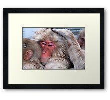 Japan Snow monkeys Framed Print