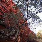 Weano Gorge rockface and tree (Pilbara) by gaylene