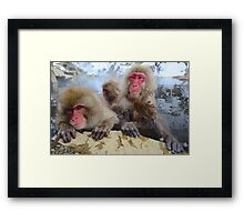 Snow Monkeys of Japan Framed Print