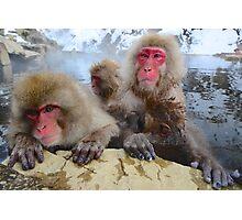 Snow Monkeys of Japan Photographic Print