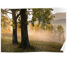 yellow trees in fog Poster