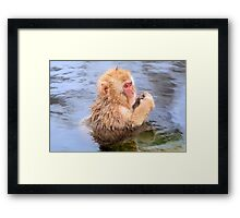 Young snow monkey Framed Print
