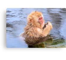 Young snow monkey Canvas Print