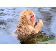 Young snow monkey Photographic Print