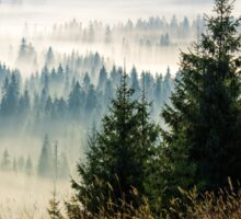 coniferous forest in foggy Romanian mountains Sticker