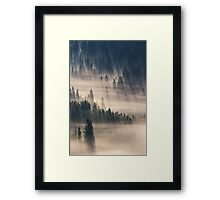 coniferous forest in foggy mountains Framed Print