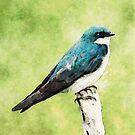 Blue Bird by Phil Perkins