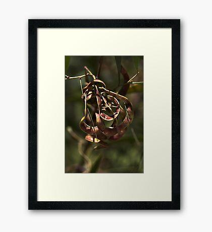 Natures Ornament Framed Print