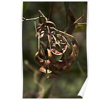 Natures Ornament Poster