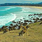 Kangas and Surfers :) by Penny Smith