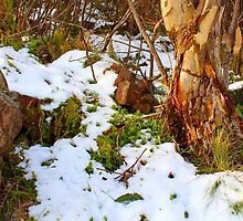 Rusty Snow by Barry Armstead