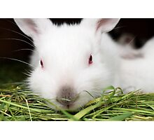 white rabbit with red eyes Photographic Print