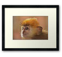 Silver leaf monkey Framed Print
