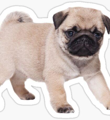 Pug Puppy 2 Sticker