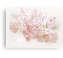 Lathyrus Dream in Pink Canvas Print