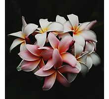Flowers In The Dark Photographic Print