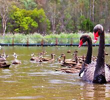 Swan Lake - Duck extras by Barry Armstead