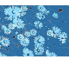 Daisies (blue) Photographic Print