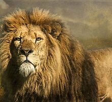 Lion on the alert by Tarrby
