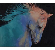 Stallion Photographic Print