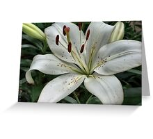 White Lily Blank Cards Greeting Card