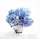 Endless Summer Hydrangeas in an Antique Silver Pitcher by LouiseK