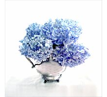 Endless Summer Hydrangeas in an Antique Silver Pitcher Photographic Print