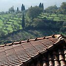 """Tuscan Trees and Valley-Petrolo (Reminds me of """"Under the Tuscan Sun"""" by Deborah Downes"""