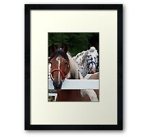 Who you talking too Horace???? Framed Print