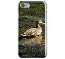 Female Mallard in the Shallows iPhone Case/Skin