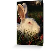 Rabbit in grass Greeting Card