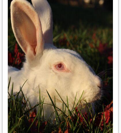 Rabbit in grass Sticker