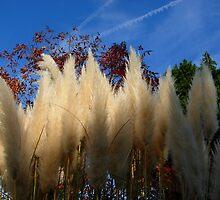 Pampas Tassels Against a Sapphire Sky by photroen