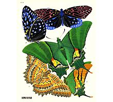 Eugene Seguy 1924 French Butterfly Print Plate 6 Photographic Print