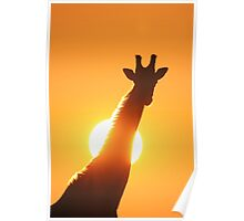 Giraffe Silhouette - Golden Sunset African Wildlife Poster