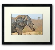 Elephant Bull - Beautiful Mud - African Wildlife Framed Print