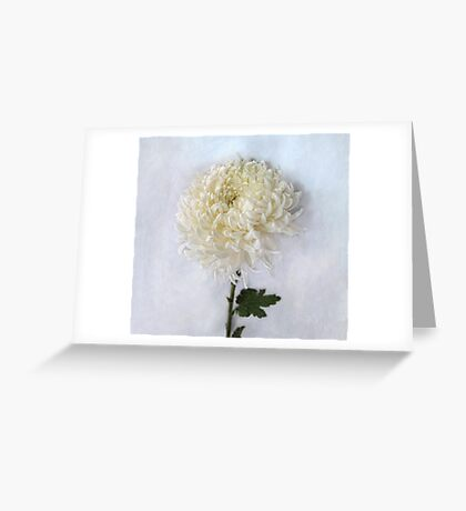 Curly White Mum Greeting Card