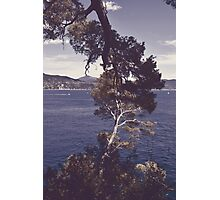 Inseparable trees Photographic Print