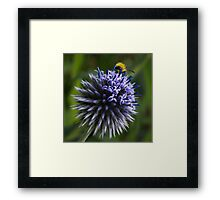 Globe Thistle and the Bee Framed Print