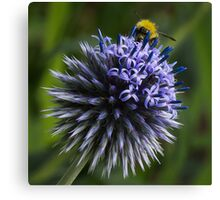 Globe Thistle and the Bee Canvas Print