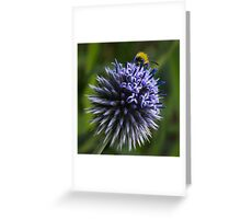 Globe Thistle and the Bee Greeting Card