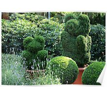 topiary  of the garden  Poster