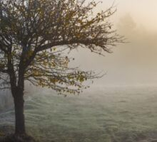 trees in fog on the meadow Sticker
