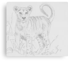 Lion cub pencil drawing Canvas Print